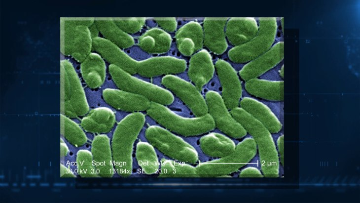 Fighting deadly drug resistant bacteria in intestines with ...