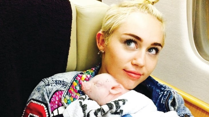 Miley Cyrus Adds Adorable Little Pig To Her Family Today Com