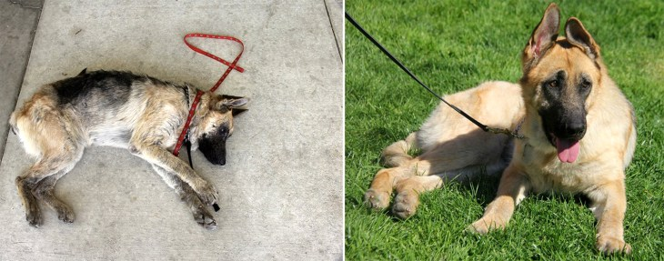 Before and after photos of Vita the dog