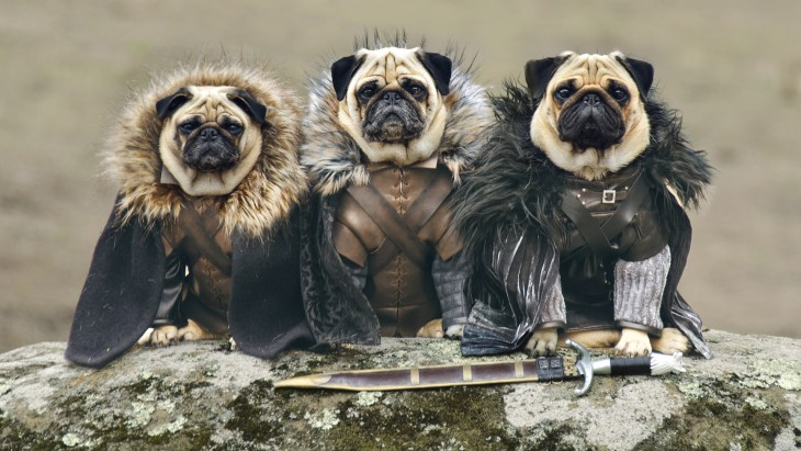See pugs dressed up as 'Game of Thrones' characters ... Pug Game Of Thrones