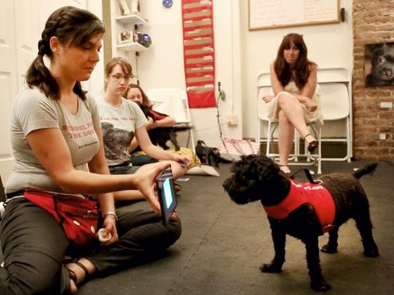 Μαθήματα χρήσης iPads για σκύλους...