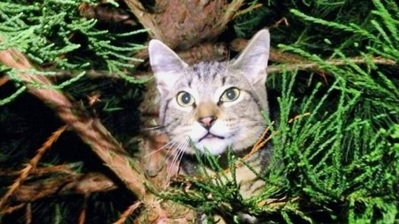 The men behind Canopy Cat Rescue have devoted themselves to helping cats stuck in trees, like this one.