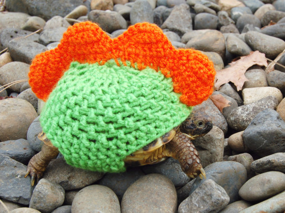 Knitting Pattern For Tortoise Jumper : Oh my! Check out these tortoises wearing sweaters - TODAY.com