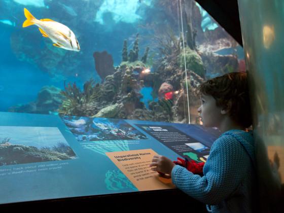 New York Public Aquarium : Vittorio Campanile, age 3, looks at exhibits at the New York Aquarium ...