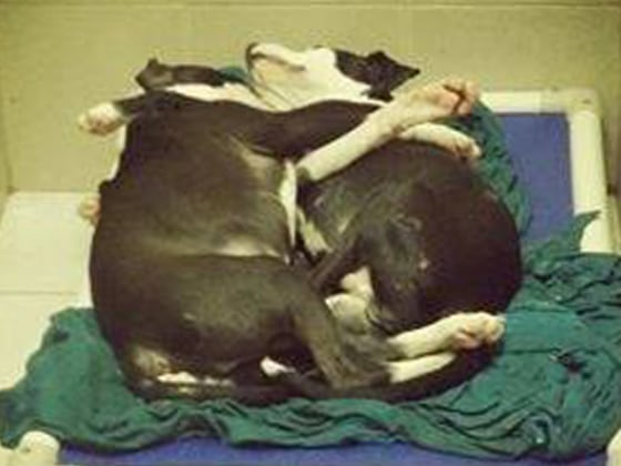 Dogs caught cuddling