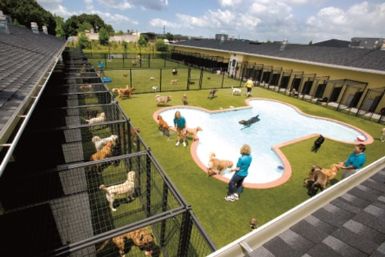 pet boarding facility with pool