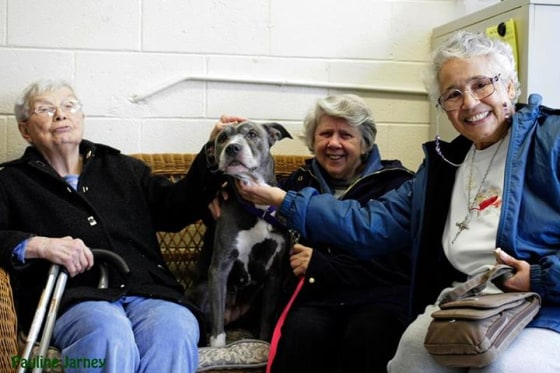 Sisters Alice Goldsmith, Virginia Johnson and Veronica Mendez (left to right) get acquainted with Remy the dog.