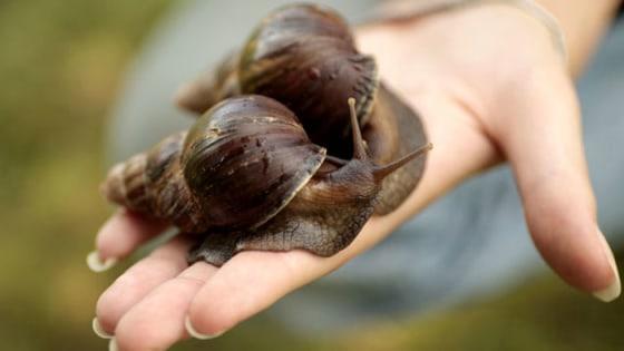 Weird Gross Beauty Product Ingredients Bird Poop Snail