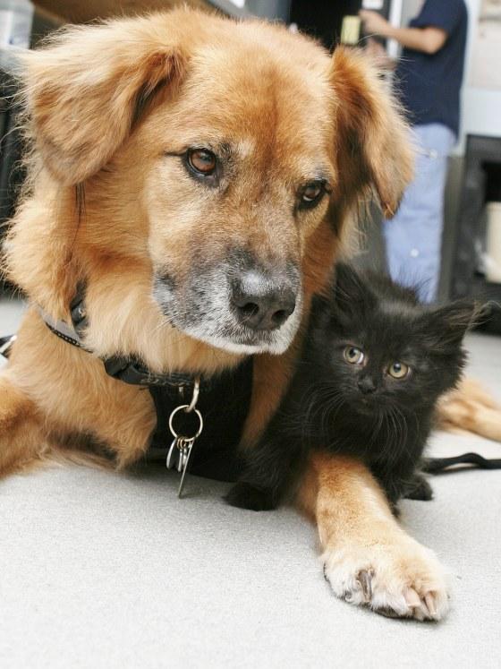Ο σκύλος που σώθηκε από τον τυφώνα βοηθάει τώρα γάτες...
