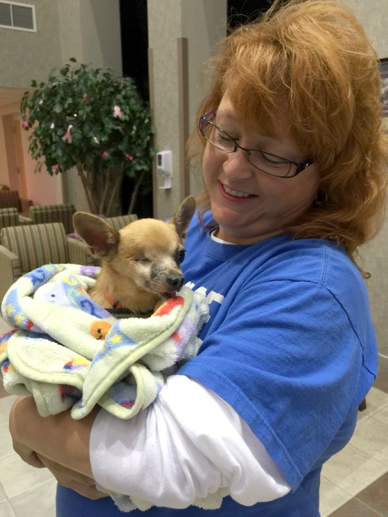 Bubba, a one-eyed Chihuahua, stopped eating shortly after he was separated from his owner.
