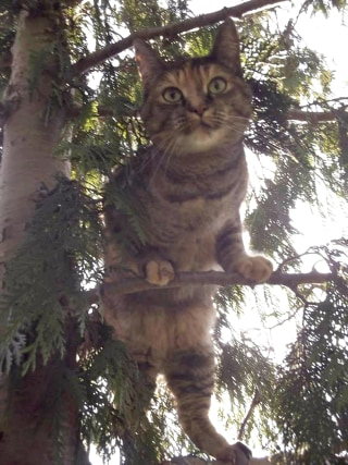 A cat named Abbey, who was stuck in a tree around Thanksgiving, was rescued just in time for the holiday.