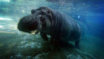 Image: TOPSHOTS-US-ANIMAL-SAN DIEGO ZOO