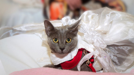 """Lily, whose costume was inspired by the Broadway hit """"Mamma Mia,"""" makes her debut at the Matilda & FURiends Salute Broadway fundraiser on August 2."""