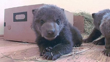 3 bears get rescued from captivity