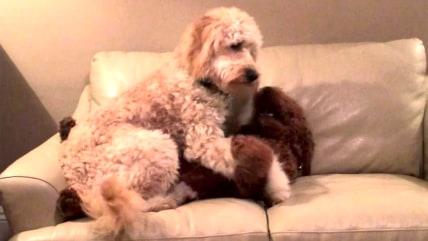 Dog comforts pal having a bad dream