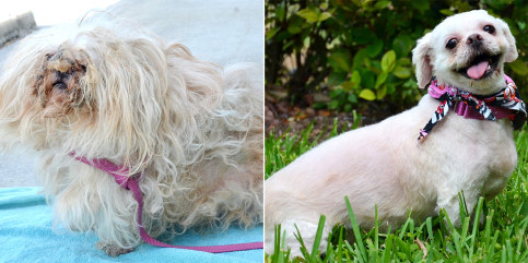 Before and after photos of Alana the dog