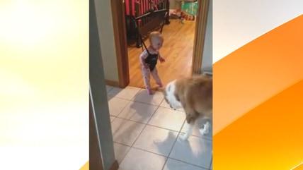 Image: Jumping dog and bouncing baby