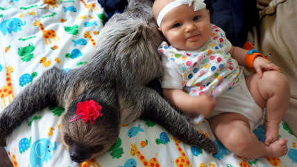 PIC FROM HIDDEN CLOVER / CATERS NEWS - (PICTURED: Baby Alia and Daisy the sloth) - These are the adorable images of a baby who has formed a