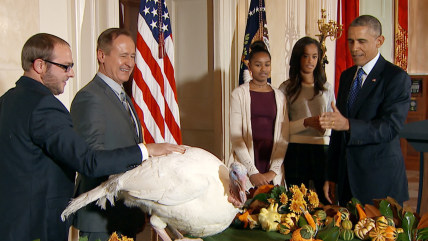 Cheese, a 20-week Ohio bird, becomes the official 2014 turkey pardoned by the White House.
