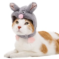 Cat in bunny costume