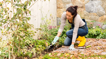 Young woman autumn gardening backyard planting tools housework flowerbed; Shutterstock ID 153715067; PO: today.com
