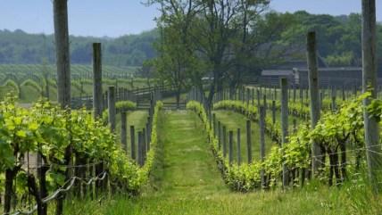 Macari Vineyards in Long Island, New York