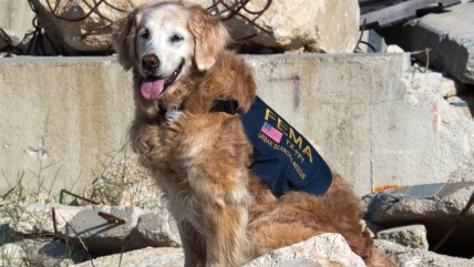 Bretagne, a disaster search dog who worked at Ground Zero after the terrorist attacks of Sept. 11, 2001.