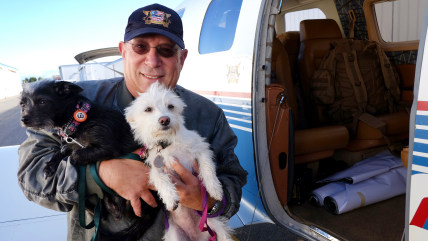 Yahuda Netanel, a private pilot with Wings of Rescue ,carries two rescue dogs prior to a flight out of the Van Nuys Airport, in Van Nuys, Calif. on We...
