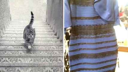 """Is this cat going up or down stairs"" is the new ""Dress"""