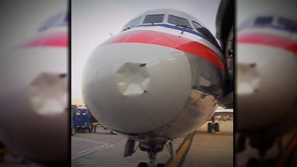 Plane struck by bird.