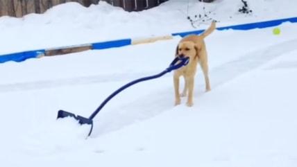 Elsa pushing snow