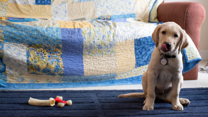IMAGE: At Home With Wrangler, TODAY's Puppy with a Purpose.