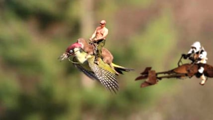 Image: weasel-woodpecker meme