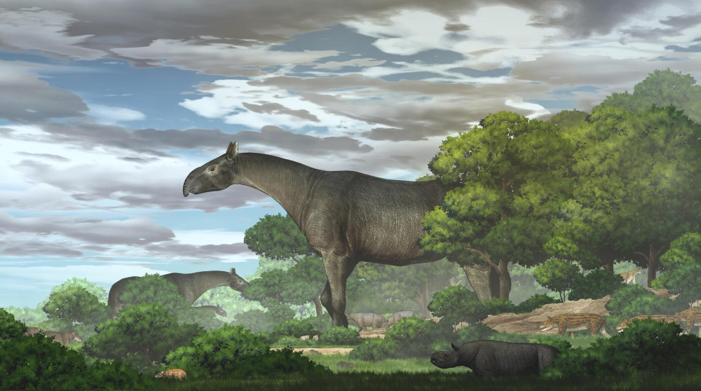New Fossils of Giant Rhinos — the Largest Land Mammals Ever — Dating Back 2 Million Years, Unearthed in China