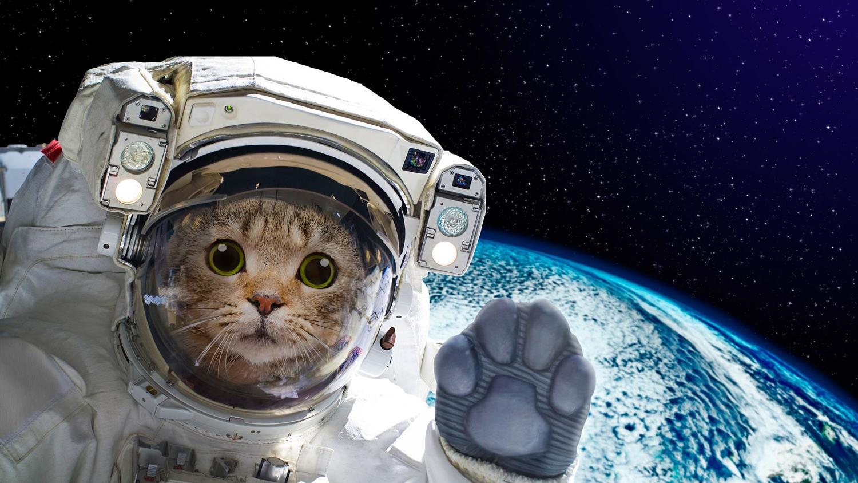 PetsInSpace-00_04_27_12-Still011.jpg