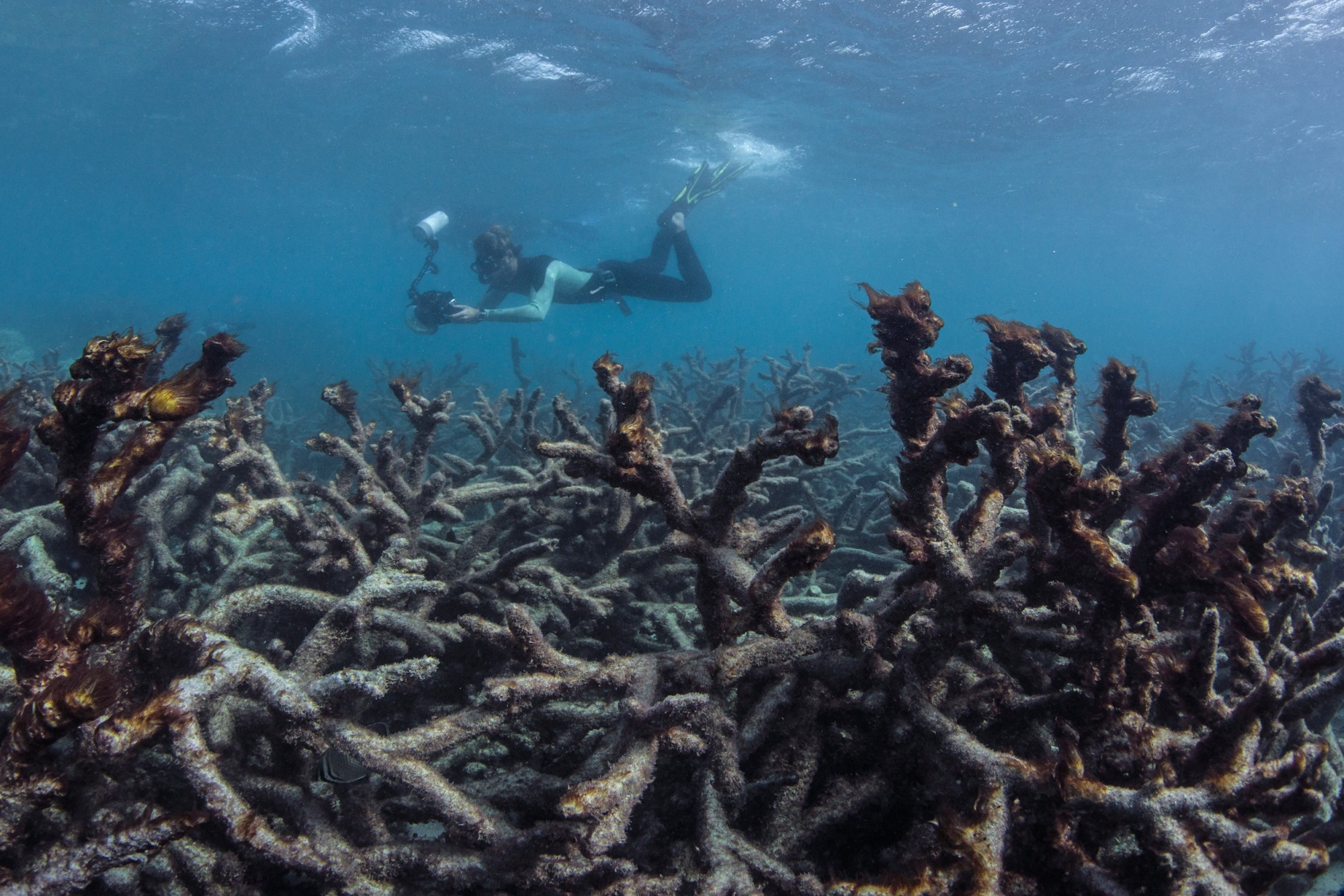"""Corals are also climate """"refugees"""""""