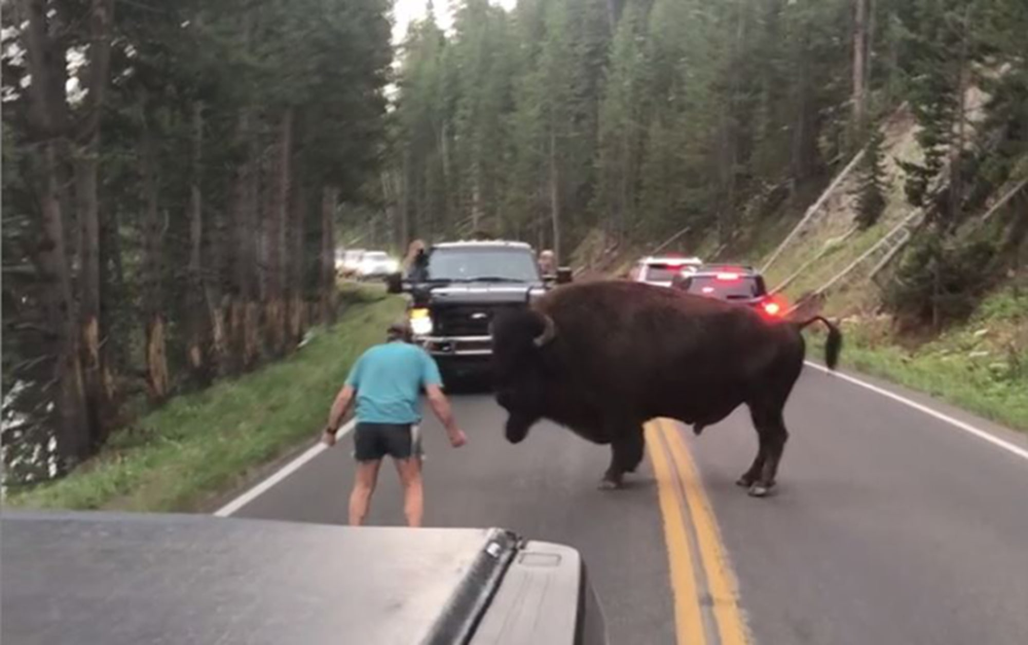180804 bison yellowstone al 1041 e784982a6017f0721bc65d810c2ca564.fit 2000w