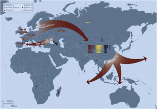 Plague came to europe just once and stayed study finds red arrows indicate branch 1 of plague cycling through europe during the 14th century eastward travel out of europe after the black death and global gumiabroncs Image collections
