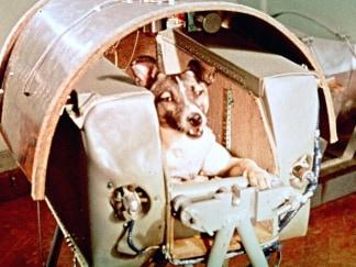Image: Sputnik II Passenger Laika
