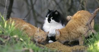cat poop parasites may pose public health hazard study