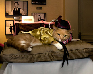 Nyc S Algonquin Hotel Cat Fashion Show The Purrrrfect Way