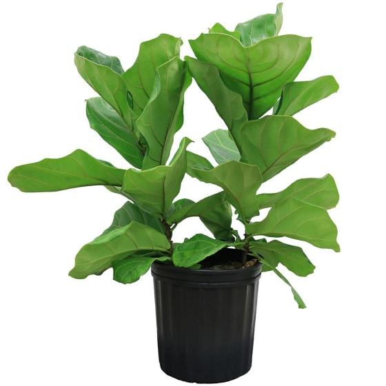 Plant Return Policy Is Pretty Great