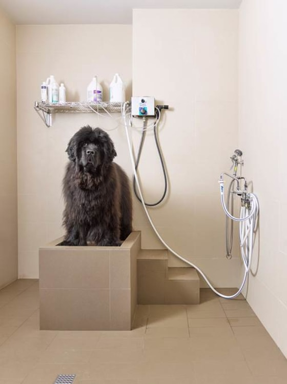 dog-shower-31418-today-02_297738c7c71d65