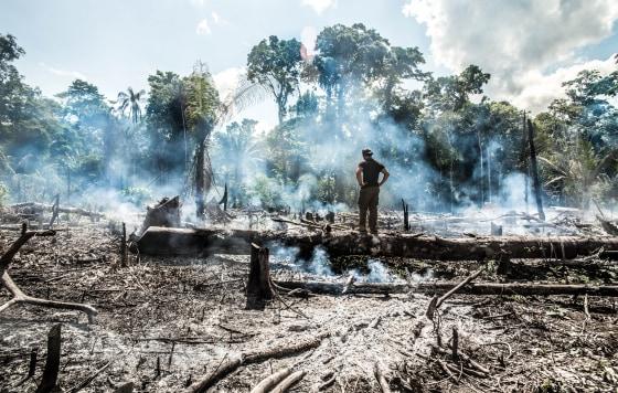 Promotion de ventes célèbre marque de designer meilleur endroit Amazon wildfires could be 'game over' for climate change ...