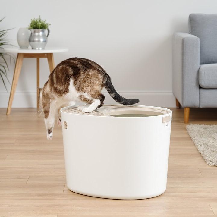 The Best Cat Litter Box Is A Top Entry Litter Box