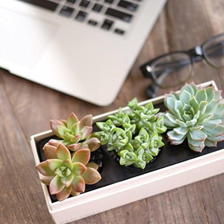 Lulas Garden Jewel Gift Box