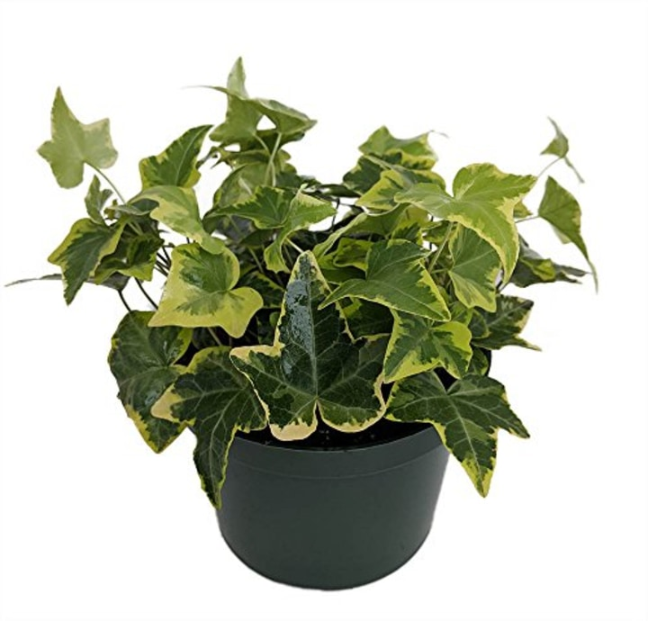 The Best And Easiest Indoor Houseplants That Wont Die On You