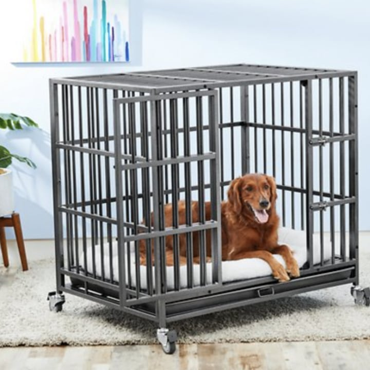 How to train your dog in a cage, according to the experts