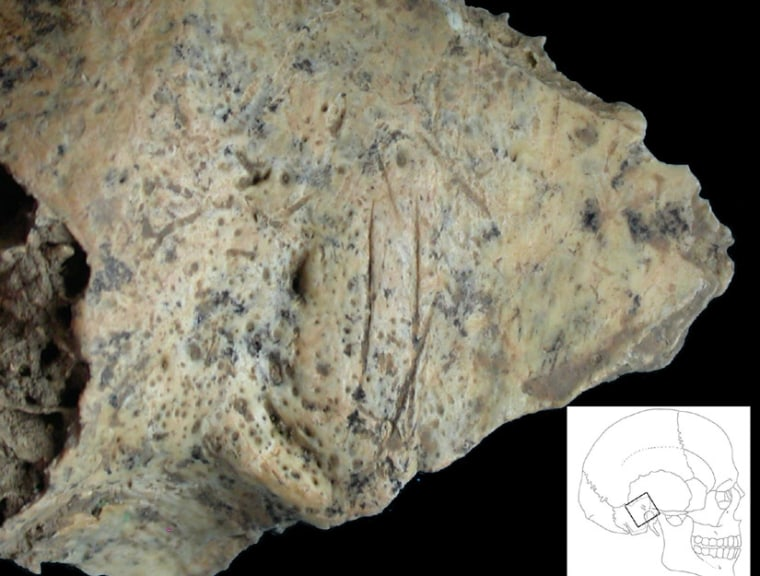 Cut marks are seen on this early human bone recovered from southeastern Europe.