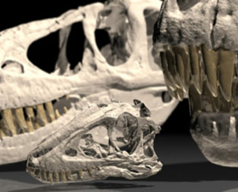 The skull of a 2-year-old juvenile Tarbosaurus appears beside an adult skull at right and a teenage skull behind for comparison.